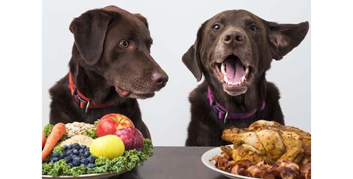 comida de verdad para perros de verdad