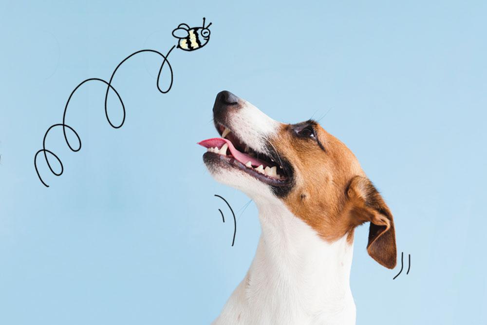picaduras insectos perros