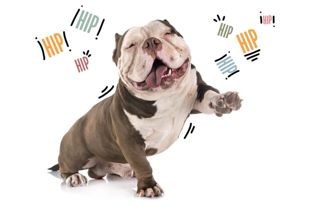 hipo en perros