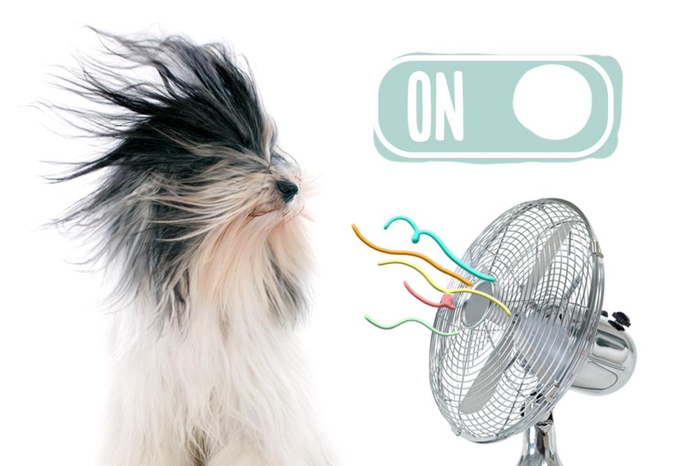 síntomas de golpes de calor en perros