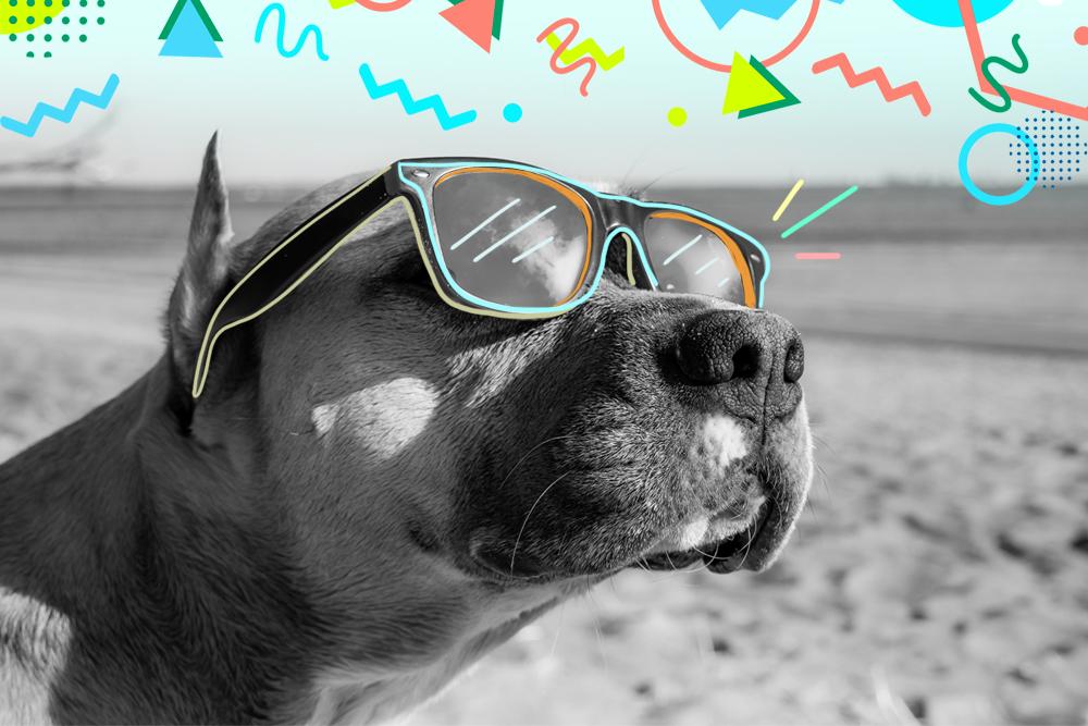playas para perro españa