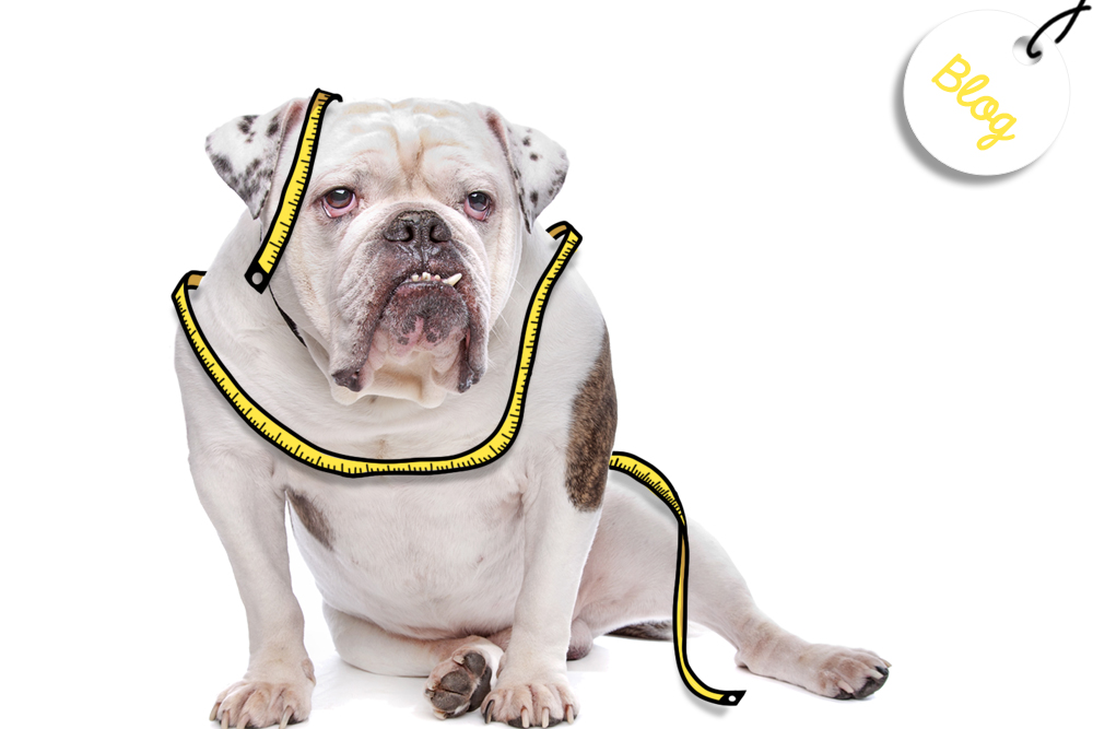 sobrepeso mascota
