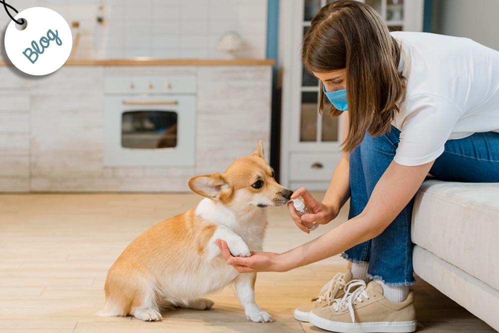 cuidado almohadillas perro