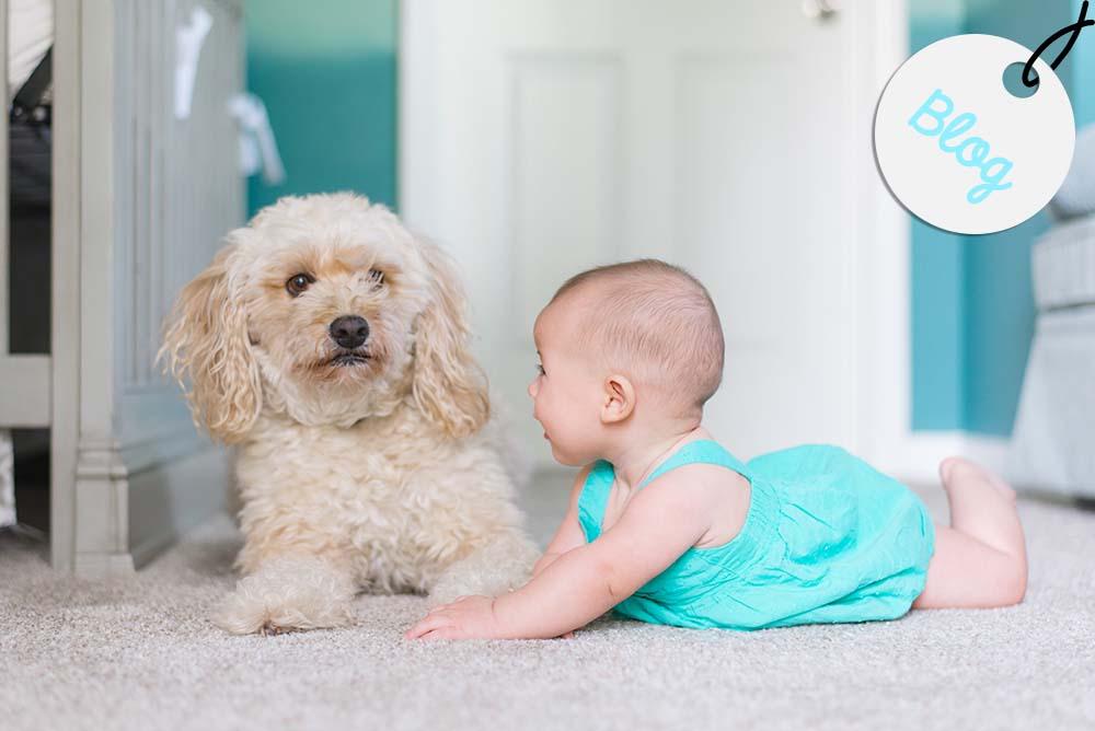 presentar un bebe a un perro
