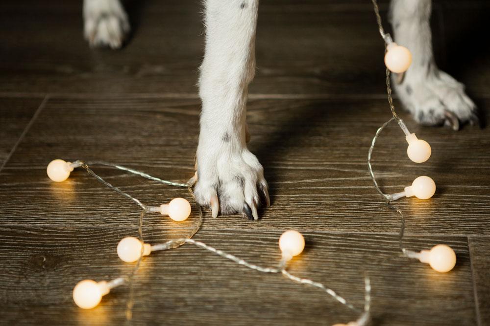 peligros adornos navidad para animales