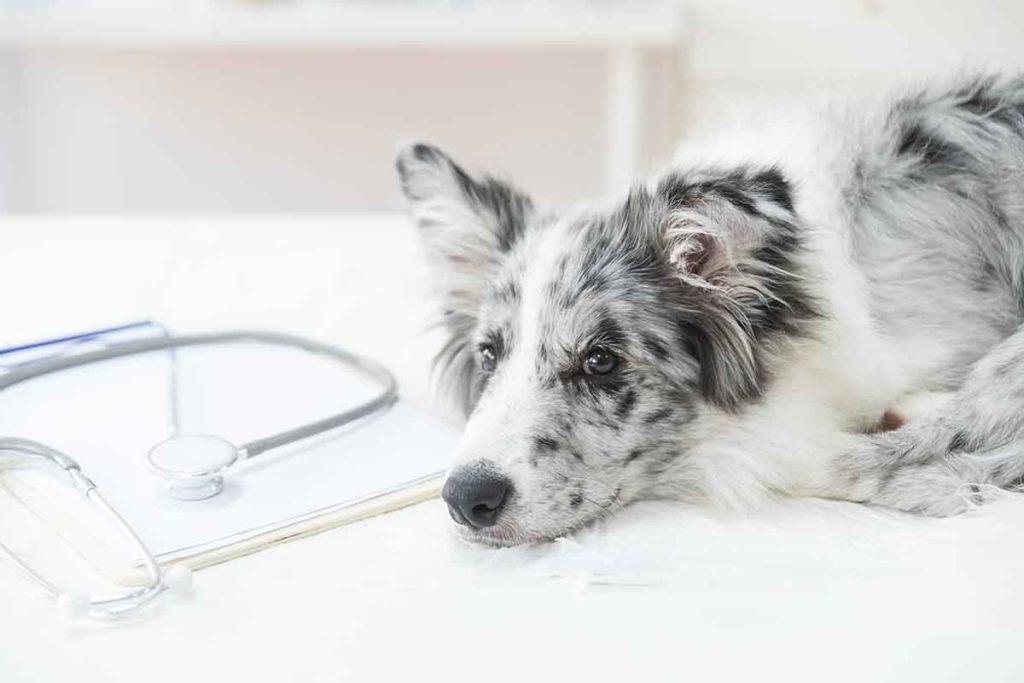 esterilizacion perros
