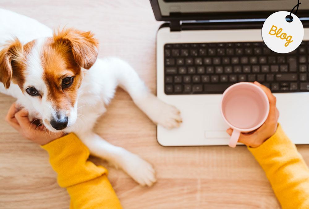 teletrabajo y perros