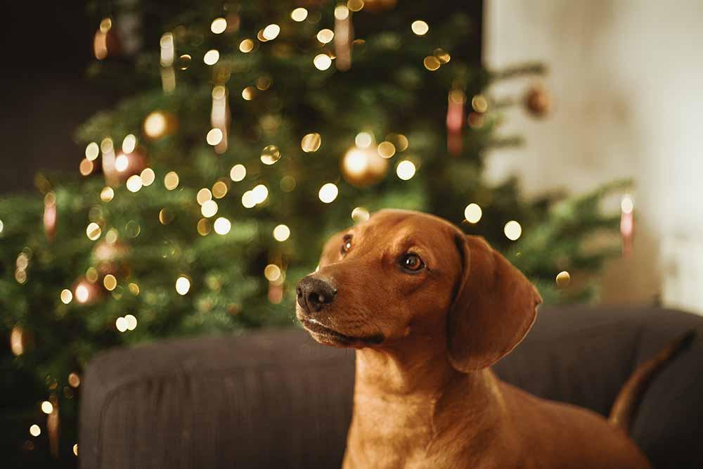 propositos año nuevo mascotas