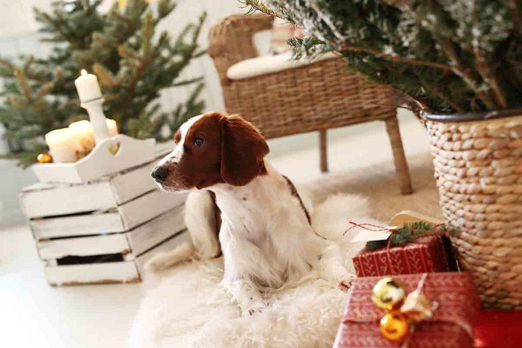 Regalos navidad mascotas