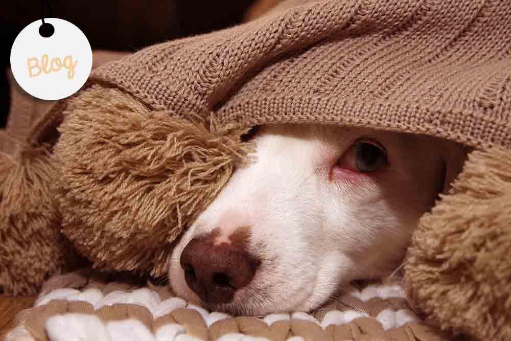 ayudar perro maltratado