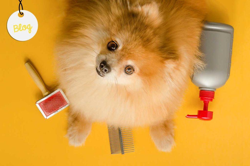 escoger cepillo perro