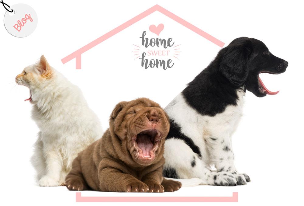 entretener mascota en casa