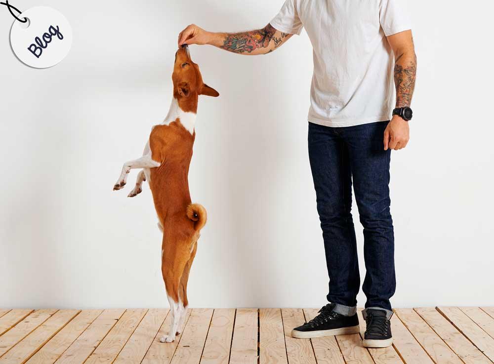 gestionar premios perros
