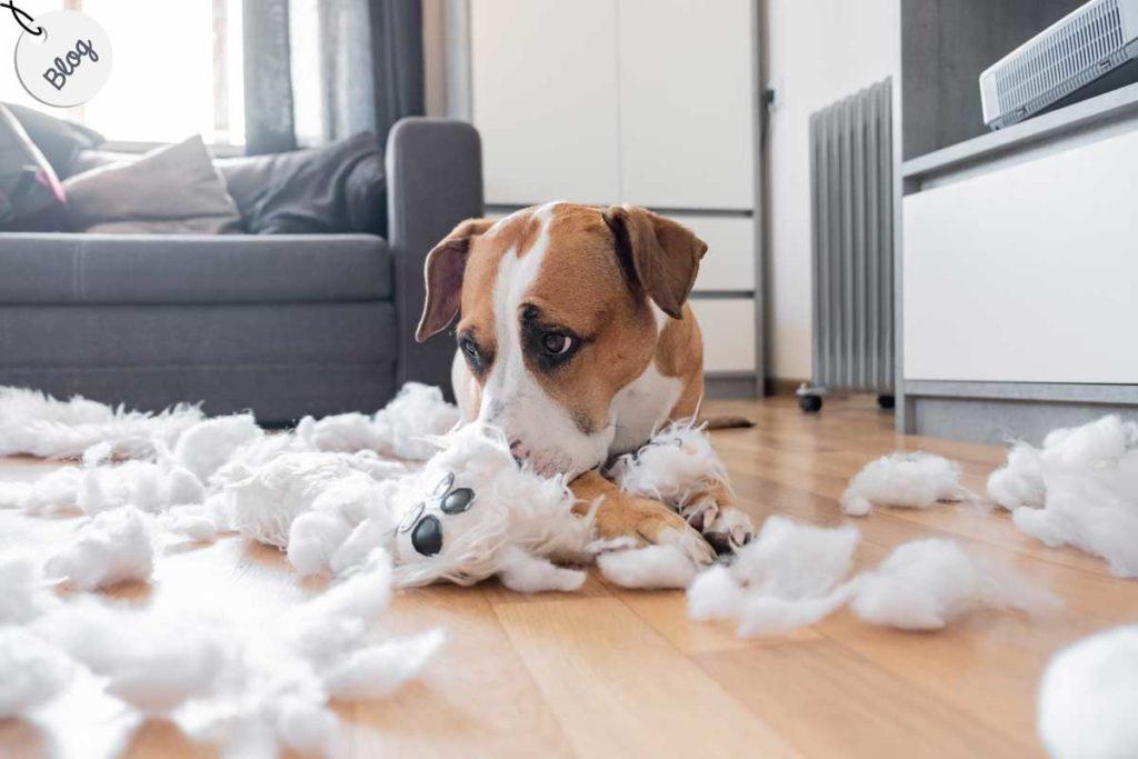 ansiedad en perro y destrozos en casa