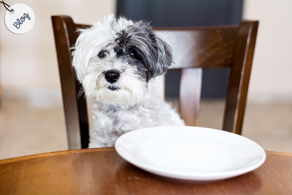 cuantas veces al dia debe comer un perro