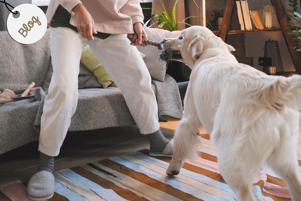 juegos en casa con perros