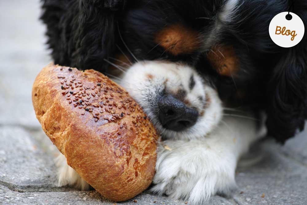 receta bagels para perros