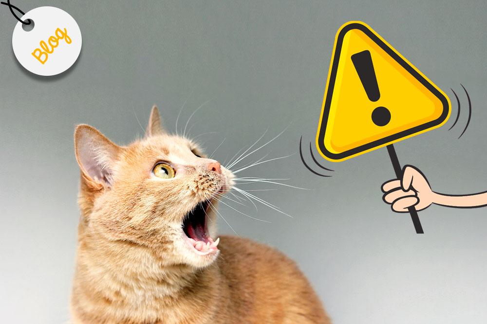 alimentos tóxicos para gatos