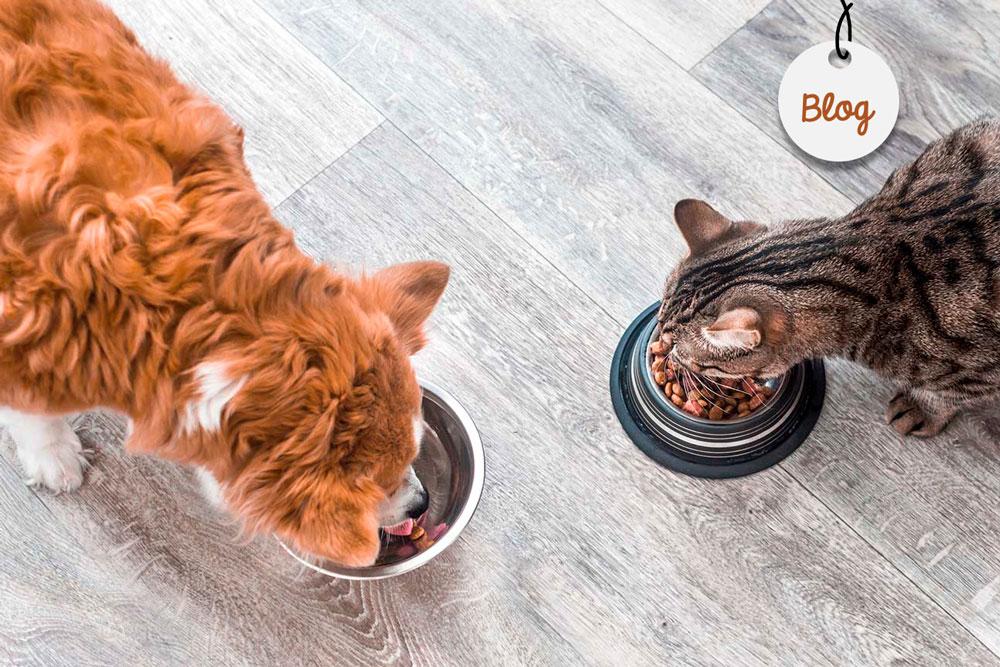 perro gatos compartir comida