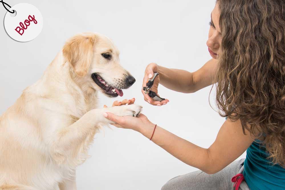 como cortar las uñas a un perro en casa