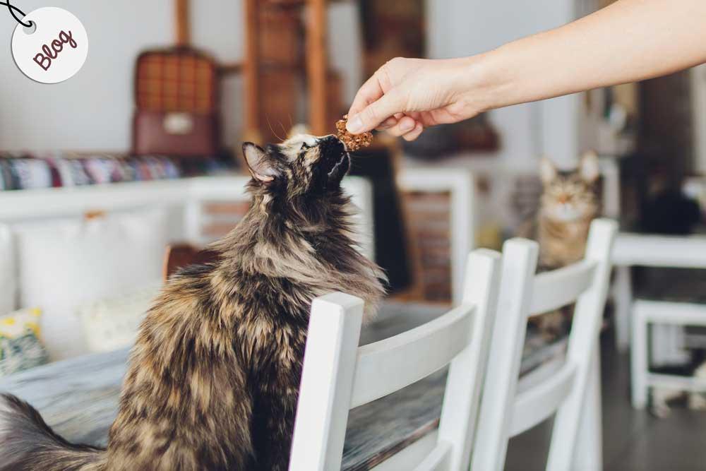 receta premios gatos