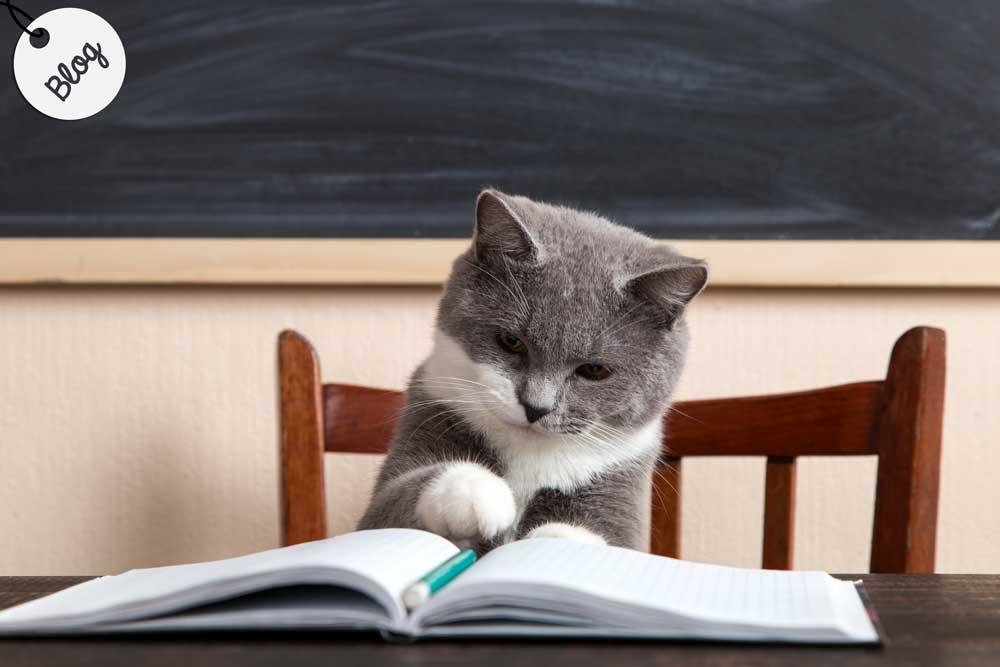 como educar un gato desde pequeño