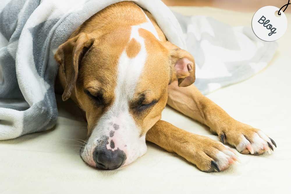 vómito perro causas y recomendaciones