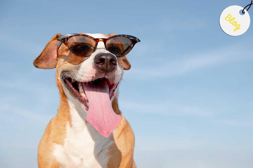 actividades verano perros