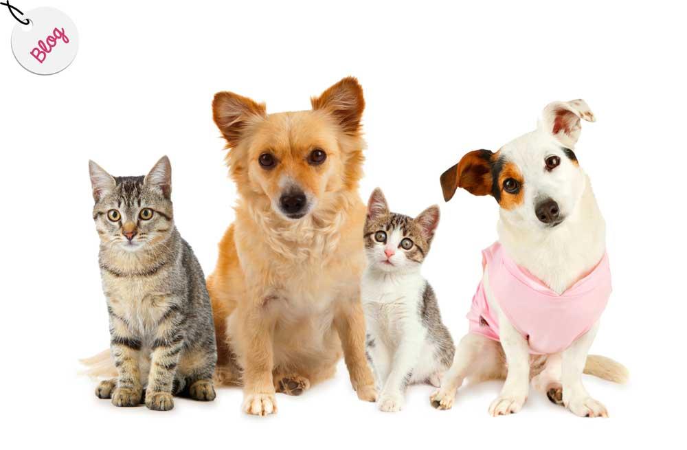 mitos perros gatos